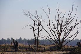 Fraaie winterwandeling over de Strabrechtse Heide in 2014.