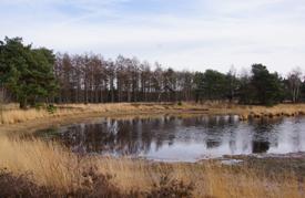 Wandeling door de bossen van Geldrop-Mierlo en over de Strabrechtse Heide