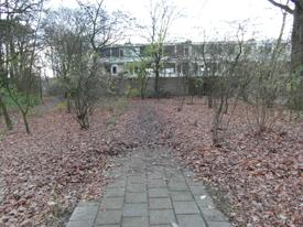 Bladeren in de wijk