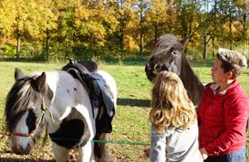 Paarden in het Kempisch Landschap