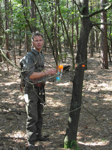 Een stippenmeneer in de Coeveringse bossen